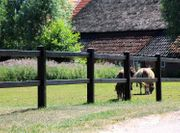 100 Weidezaun Rustikal schwarz Pferdezaun