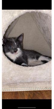 Kitten Baby
