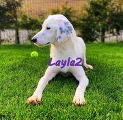 Zauberhafte Mischlingshündin Layla