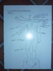 Lymphsystem Übersicht