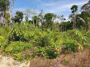 Brasilien 11 2 Ha Grundstück