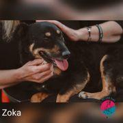 Zoka - Hat ihren Anspruch auf