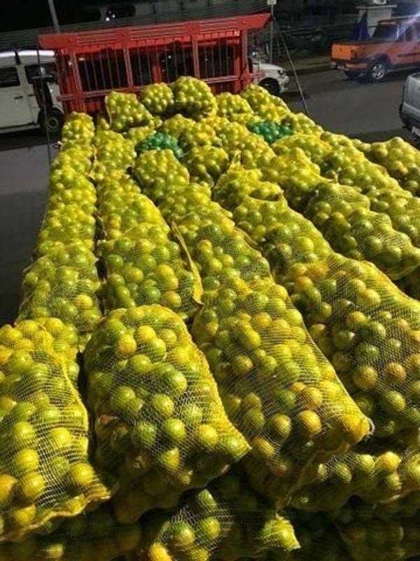 Brasilien riesengrosse 1 036 2