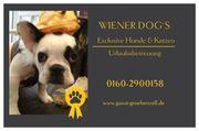 WIENER DOG S Exclusive Hunde
