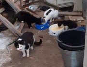 Streuner Katzen und Kater kastriert