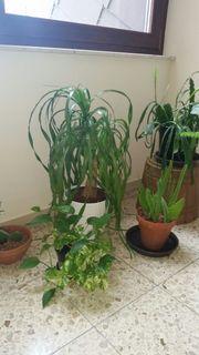 Efeutute Hauswurz und weitere Pflanzen