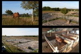 Pferdeboxen, Stellplätze - Laufstall frei