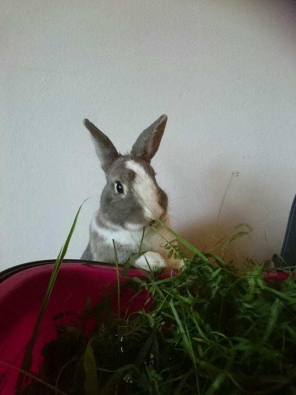 Kaninchen suchen neues zu Hause