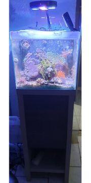 60l Meerwasser Aquarium komplett mit
