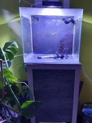 Meerwasseraquarium Nano komolett
