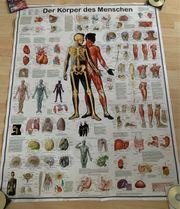 Poster Der Körper des Menschen