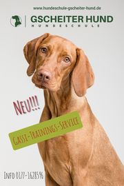 Gassiservice- Hundetraining-Hundeschule