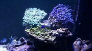 Meerwasser Gestein Korallen
