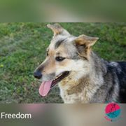 Freedom - Nach der Freiheit sucht