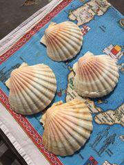 Muscheln gross 4 Stück ca