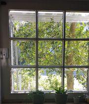 Gewölbtes Glas Glaseinsätze Wölbglasscheiben Fensterglas