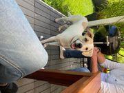 Junghund Leo sucht sein Zuhause