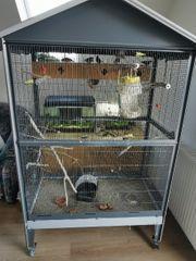 zebrafinken mit Voliere