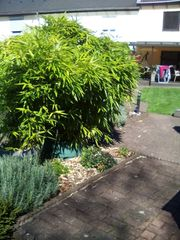 Bambus ca 80x150cm