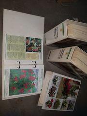 Zimmerpflanzen von A - Z 4