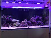 Meerwasser Aquarium Red Sea Reefer