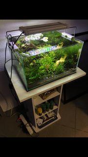 Garnelen Aquarium Süßwasser Becken