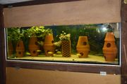 1 großes Aquarium