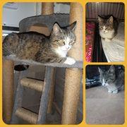 Katze Lissy 1 Jahr kastriert