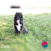 Ziva - Augenweide sucht Traumzuhause