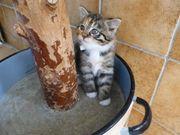 13 Kitten wunderschöne und lieb