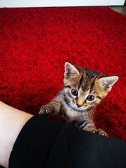 Baby Katzen Mischlinge