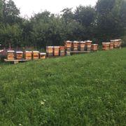 Bienenvölker zu verkaufen