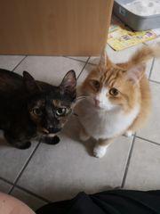 Katzenfreunde Mikesch Jule suchen eine
