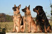 Ihre mobile Hundeschule für Dortmund