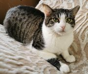 Freundliche Katze Minou wartet auf
