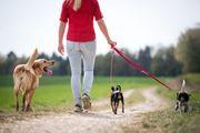 Dogwalker Hundebetreuung durch ausgebildete Dogwalkerin