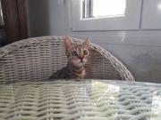 Max verspieltes Katzenkind ca 4
