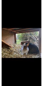 Kaninchenpaar abzugeben