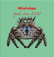 Whatsapgruppe zum Thema Vogelspinnen sucht