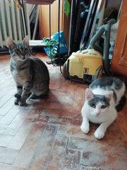 Notfall Katzen Mona und Kari