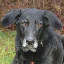 Lenia, 10 Jahre - Mischling - Tierhilfe Franken e.V.