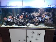 Meerwasseraquarium 600 liter komplett - letzte