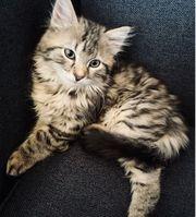 Babykatze sucht zuhause