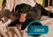 Darf Jano für immer bei