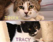 Wer kann Tracy Tinka die