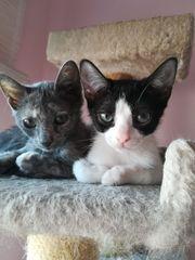 Katzen Yuma und Sari suchen