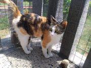 Wunderschöne Tierschutzkatzen- bitte schaut die