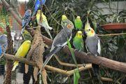30 Vogelausstellung mit großer Rahmenschau