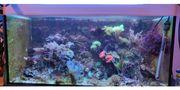 Meerwasser Aquarium 250 Liter Zubehör