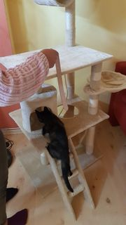 Katzenbetreuung Hauskatzenbetreuung Katzensitting